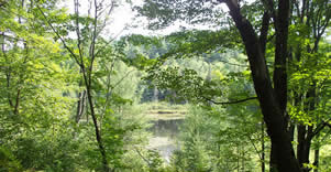 Forest and pond