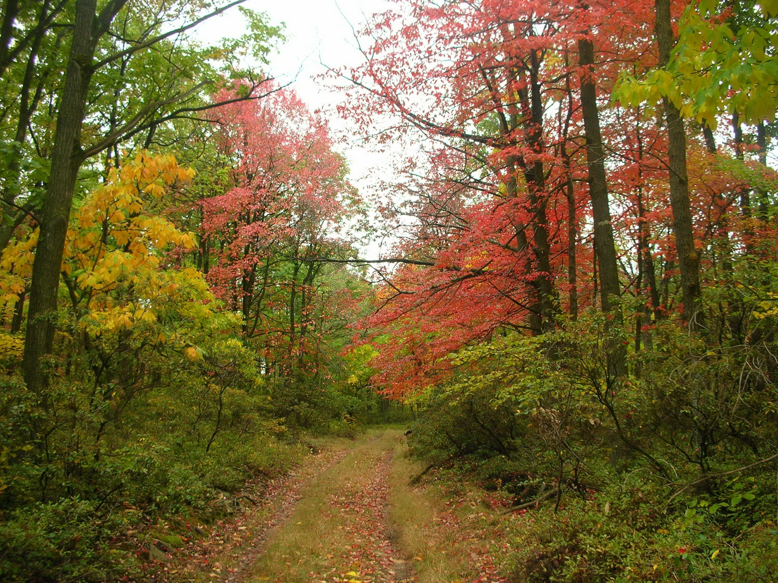 A forest in the fall.
