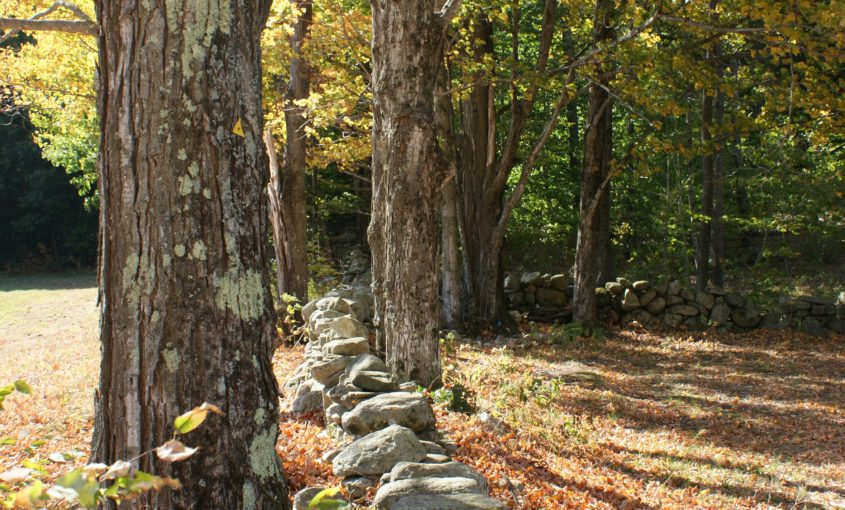 Stone wall in the forest.