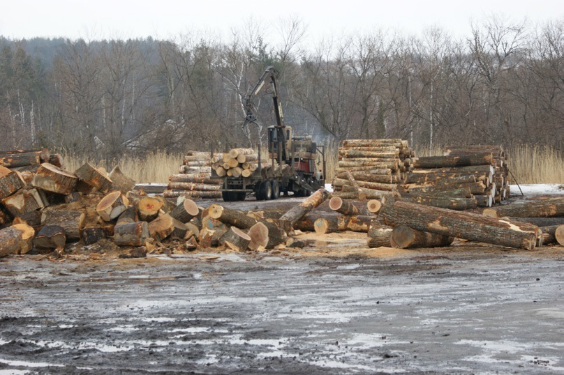 Log yard at Columbia Forest Products, Newport, VT