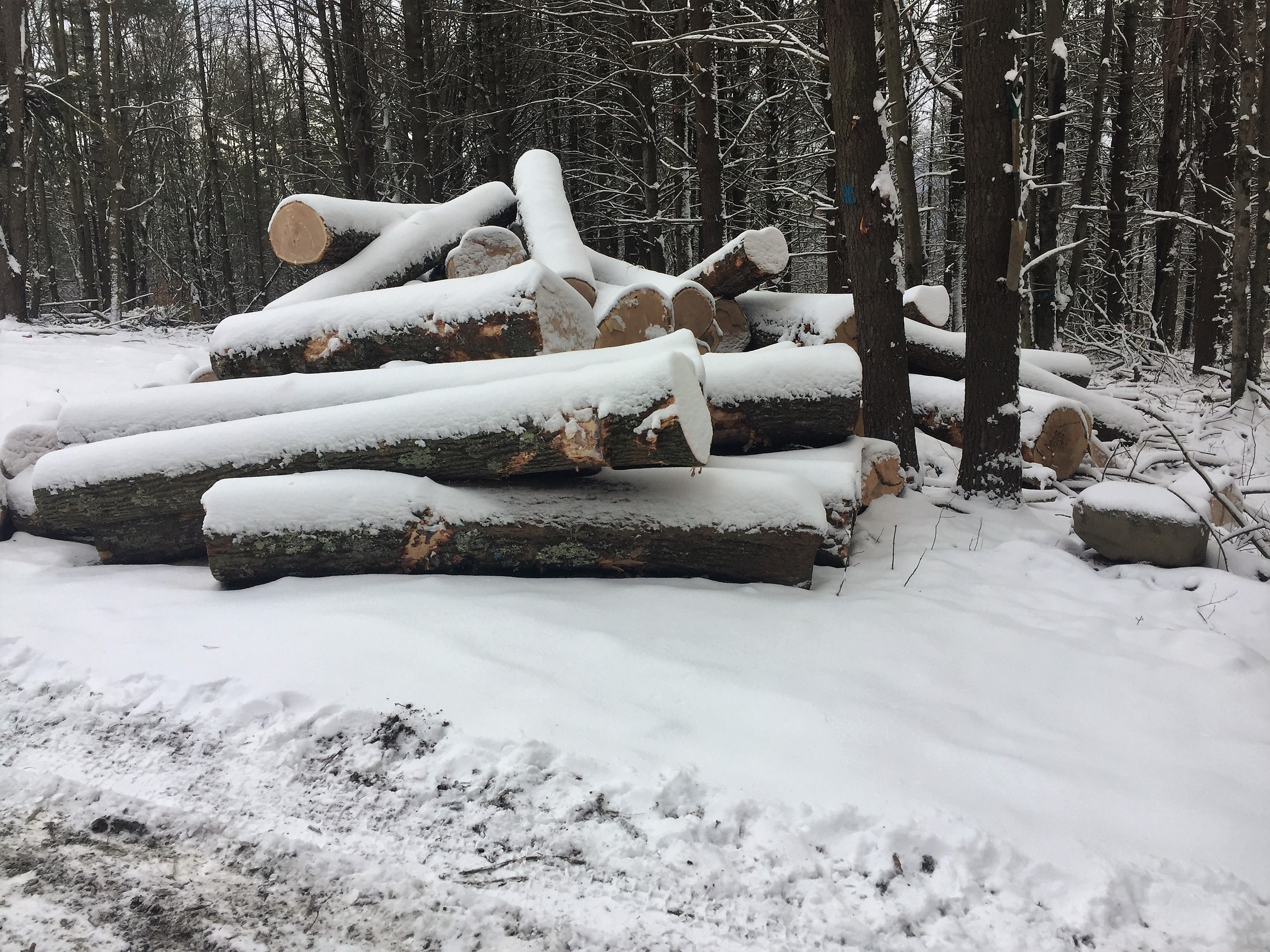 Pile of snowy logs